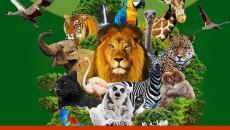 Napoli, riapre lo Zoo tra misure di sicurezza nel rispetto delle ordinanze regionali, nuovi arrivi, nuove nascite e abbellimenti di alcuni exhibit in struttura Finalmente da lunedì 25 maggio 2020 sipuò tornare allo Zoo di Napoli, in completa sicurezza, nel […]